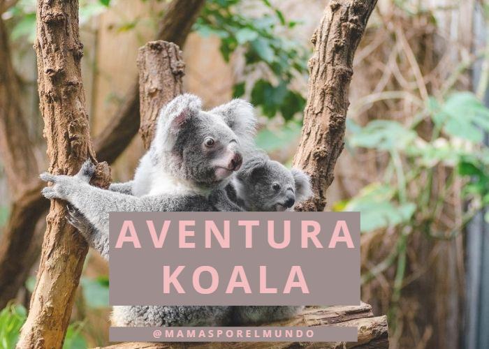 Aventura Koala